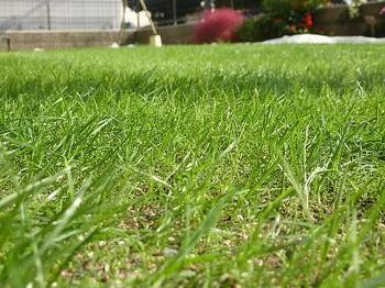 2010.10.23 芝の状態.jpg