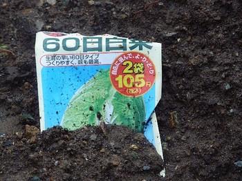 2010.10.30 60日白菜.jpg
