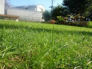 2010.11.06 芝刈り前1.jpg