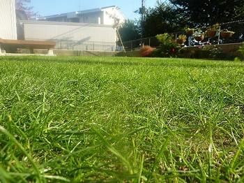 2010.11.06 芝刈り後1.jpg
