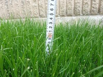 2011.05.22 芝の状態2.jpg