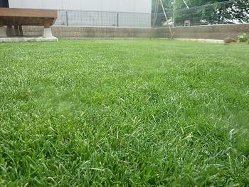 2011.05.22 芝の状態6.jpg