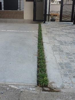 駐車場(目地6).jpg
