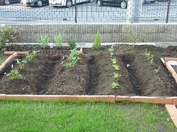 2010.10.16 第一家庭菜園.jpg