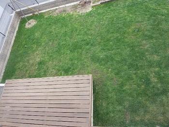 2011.05.03 芝の状態3.jpg