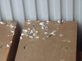 2011.05.03 鳥の落し物.jpg