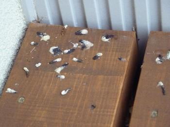 2011.05.11 鳥の落し物.jpg