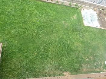 2011.05.22 芝の状態5.jpg